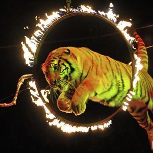 Цирки Кунашака